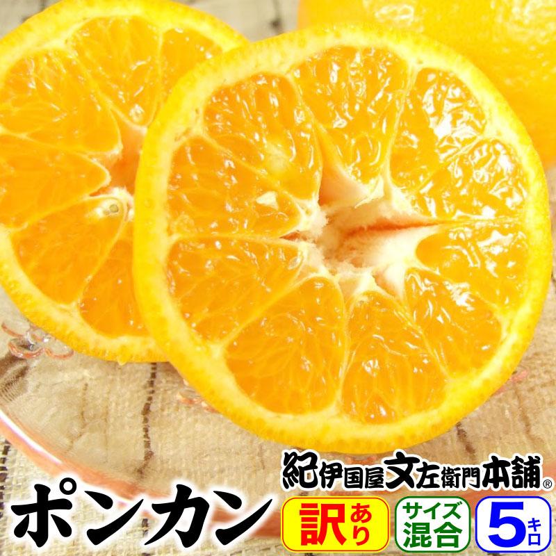 春かんきつ;春みかん>ポンカン(紀州和歌山・有田産)