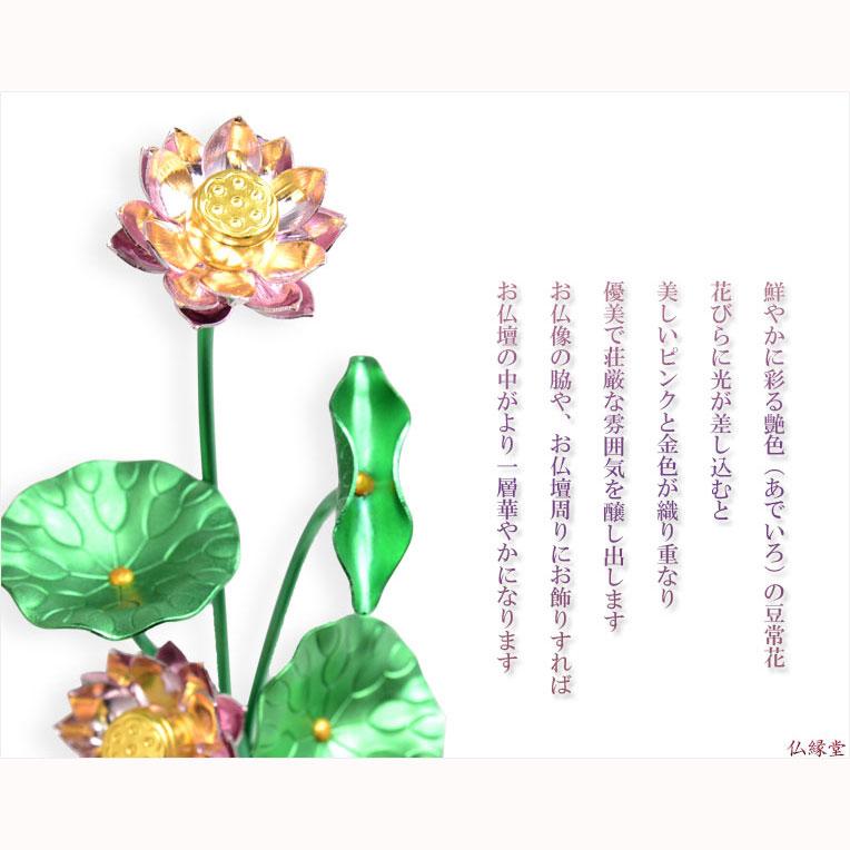 Butuendo Rakuten Global Market Bean Flower In Constant Bloom