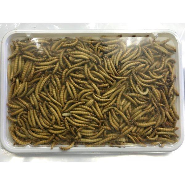 ハムスターなどの小動物 爬虫類 熱帯魚 期間限定特価品 小鳥等の餌に最適 冷凍ミルワーム 本物 クール便発送 100g×3個