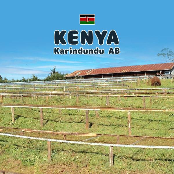 おすすめ特集 2021ニュークロップ 超激得SALE コーヒー品質が世界で最も優れている国のひとつという評価を得ているケニアの非常に有名なニエリ地区より ケニア カリンドゥンドゥ 送料込み価格 AB 200g