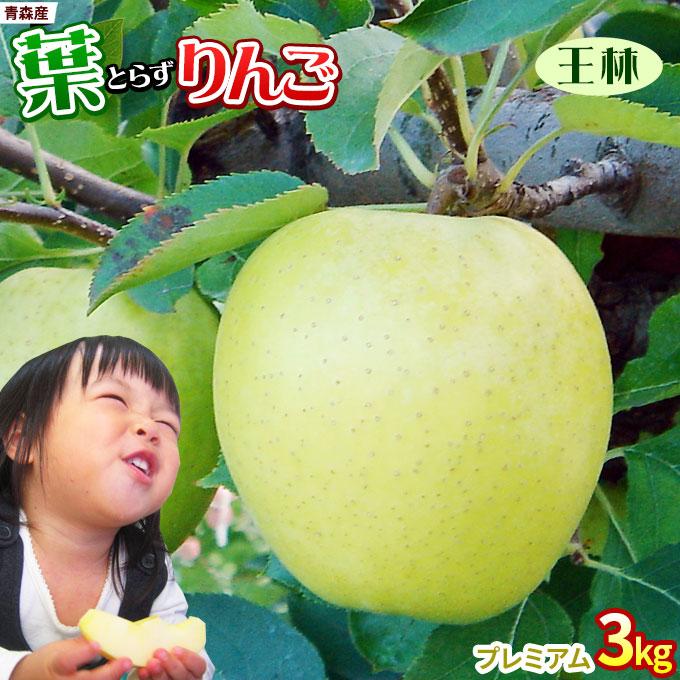 りんご の常識を変える葉とらずりんご 甘さ際立つ青いのに甘い品種 葉とらず王林 2021予約スタート 葉っぱの影は甘さのサイン 葉とらずりんご 王林3kg プレミアム 贈答用 8-10玉 GOLD農園 林檎 リンゴ お歳暮 本場青森 送料無料でお届けします 青森りんご GOLD 送料無料 アップル ゴールド農園から産直新鮮便 爆売りセール開催中 産地直送同梱不可
