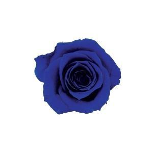 バラのプリザーブドフラワー! verdissimo ヴェルディッシモ バルク プリンセスローズ ロイヤルブルー 59218【C】 こちらの商品は北海道、沖縄、離島配送不可
