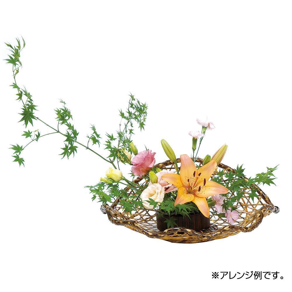 萬洋 虎六ツ目帆立水盤 11-613【C】