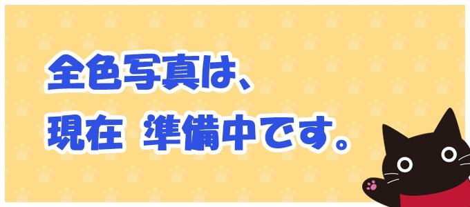 トラねこと黒ねこのパスケース  猫 サンプル品 SALE 限定品 お試し 訳あり 1点もの アップリケ ねこ ねこ柄 猫柄 ネコ ねこ顔 ねこグッズ ねこ雑貨 HIKOSEN CARA SM1 Z19-117_s