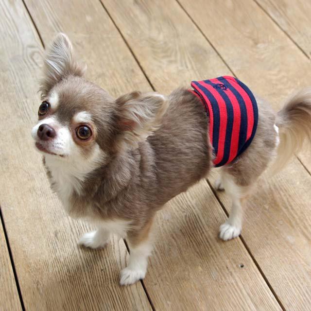 【最大350円OFFクーポン有】マナーベルト ボーダー XXS 606481 マナーベルト ドッグウェア 犬 マーキング しつけ 小型犬 ペット 犬と生活 レッド・ネイビー【D】【B】 【メール便】 【MAIL】