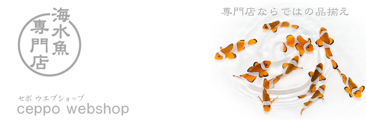 CEPPO WEB SHOP:名古屋の海水魚専門店です、お気軽にお問い合わせください。