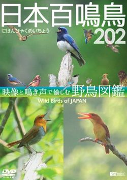 日本の野鳥 202種 をこだわりの 公式サイト 推奨 音 と 映像 で丁寧にまとめあげた映像図鑑 にほんひゃくめいちょう 日本百鳴鳥 趣味 教養 DVD 202 映像と鳴き声で愉しむ野鳥図鑑