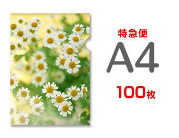 【特急便】A4クリアファイル100枚(単価280円), CouPole:0339cc03 --- luzernecountybrewers.com