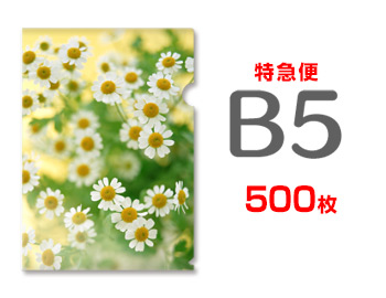 【特急便】B5クリアファイル500枚(単価122円), まめ暮らし:fad14026 --- luzernecountybrewers.com