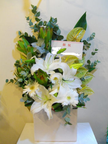 05P04Jul11 フラワーアレンジ (お祝い花/ホワイト) ar10004