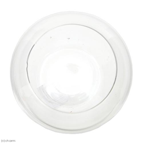 アクアボール Mサイズ H1003 エアプランツ 多肉植物 ティランジア ガラス 関東当日便