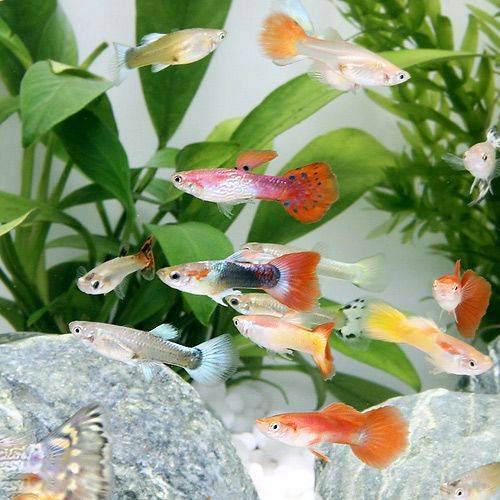 初心者でも飼いやすい!ゆらゆらと泳ぐ、可愛い熱帯魚のおすすめは?
