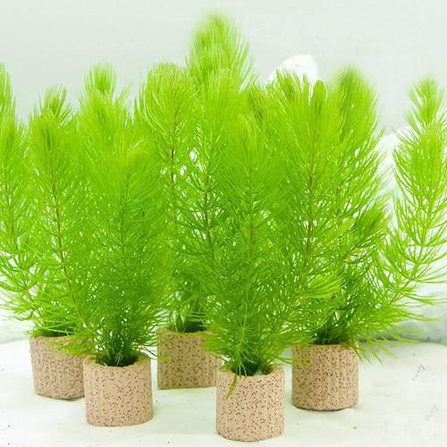 水草 ライフマルチ 茶 マツモ ミニ 3個 新作製品 世界最高品質人気 セール 無農薬