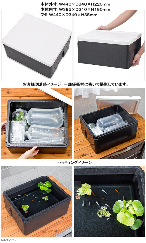 Styrofoam box ( click here sends bio ) (black) for biological simultaneously purchase only