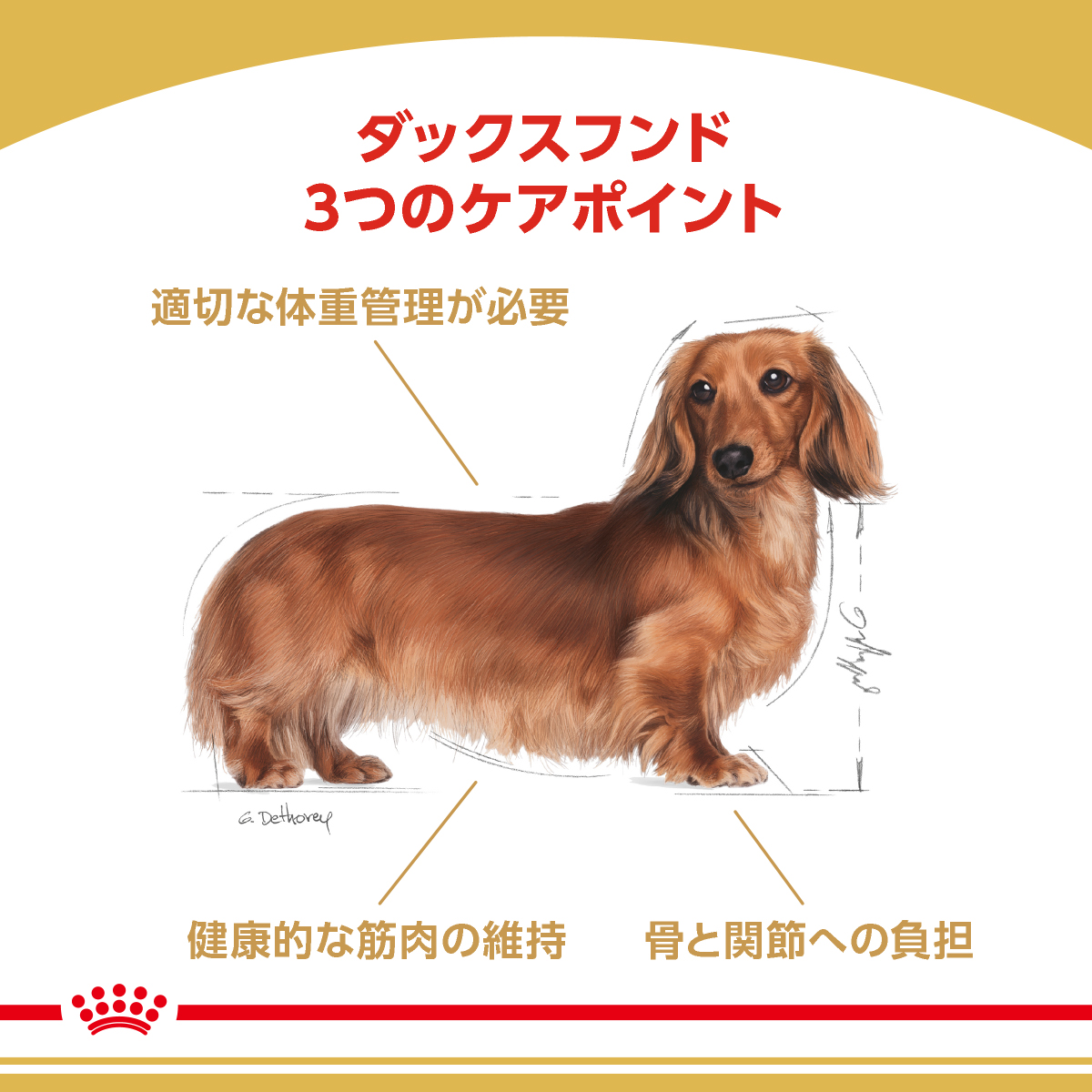 ロイヤルカナン ダックスフンド 成犬用 3kg4袋 沖縄別途送料 ジップ