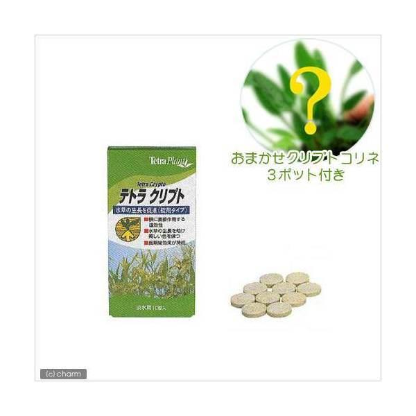 (水草)テトラ クリプト10錠入+おまかせクリプトコリネ(3ポット分) 本州・四国限定