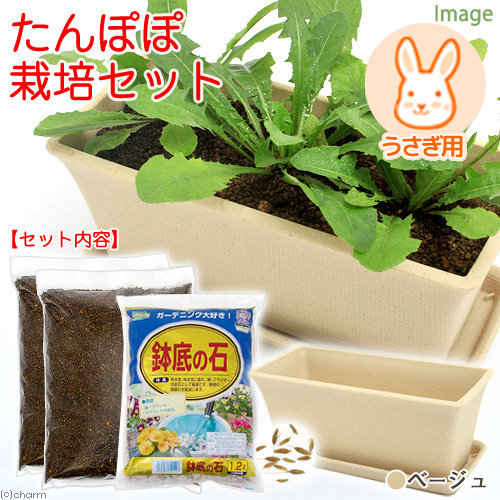 Chanet Dandelion Cultivated Set Seeds Soil And Planter Plate