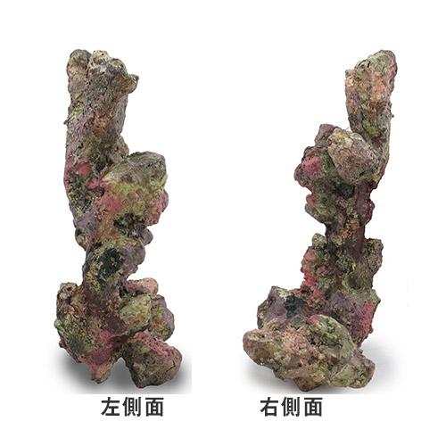 ライブロックモジュール F アクアリウム 擬岩 関東当日便