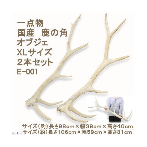 (大型)一点物 国産 鹿の角 オブジェ XLサイズ 2本セット E-001 別途大型手数料・同梱不可・代引不可