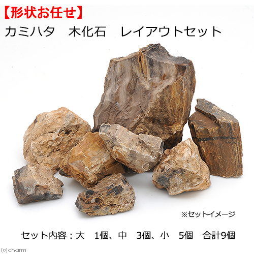 カミハタ 入荷予定 木化石 マーケティング レイアウトセット 形状おまかせ 関東当日便 45~75cm水槽向け