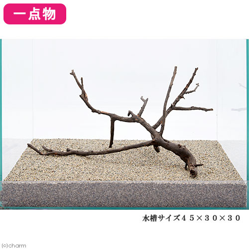 一点物 極上流木単体 45cm水槽用 223119 関東当日便