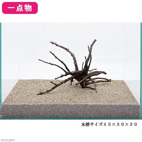 一点物 極上流木単体 45cm水槽用 223125 関東当日便