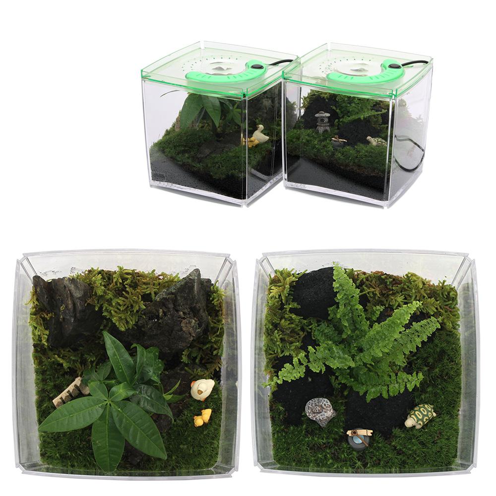 (観葉植物)ゼンスイ ライティキューブ2台セットで楽しむ苔レイアウトセット 本州四国限定