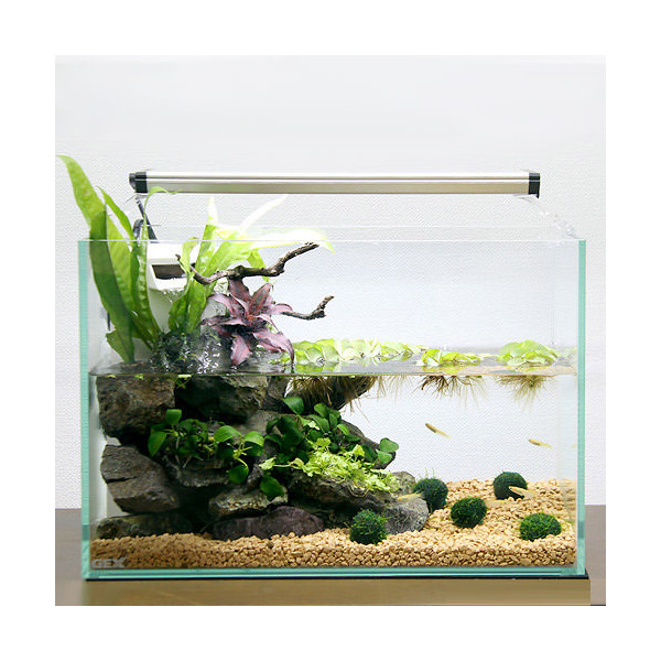 Chanet Gex Glass Terrier Silent 360 Slim H Mini Terrarium Medaka