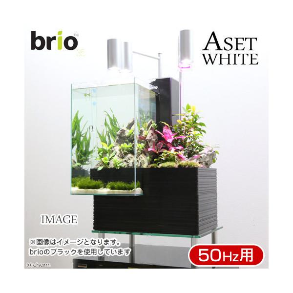 後日生体(熱帯魚) brio35 ホワイト 50Hz 東日本用 Aセット 本州・四国限定
