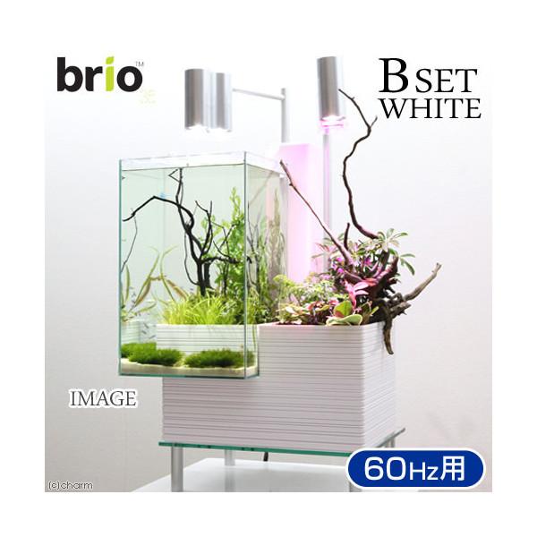 後日生体(熱帯魚) brio35 ホワイト 60Hz 西日本用 Bセット 本州・四国限定