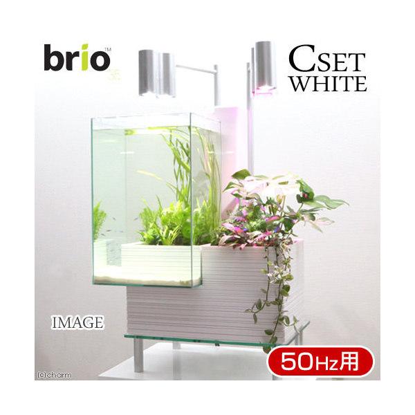 後日生体(熱帯魚) brio35 ホワイト 50Hz 東日本用 Cセット 本州・四国限定