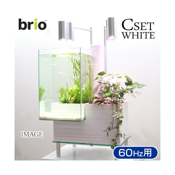後日生体(熱帯魚) brio35 ホワイト 60Hz 西日本用 Cセット 本州・四国限定