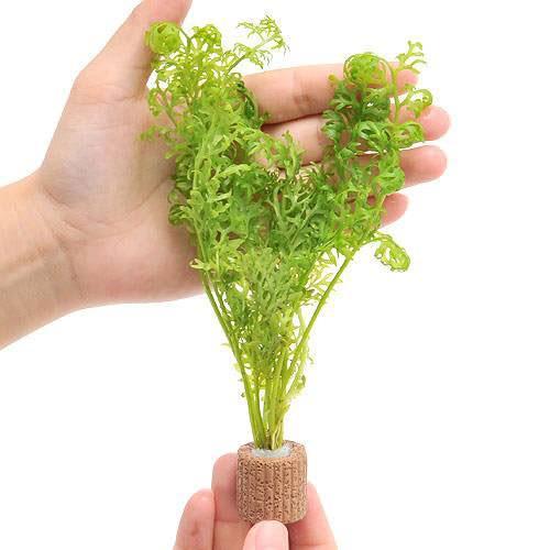 AL完売しました 水草 ライフマルチ セール商品 茶 アメリカンウォータースプライト 1個 無農薬 水上葉