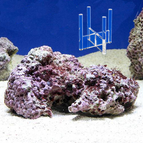 (海水魚)Sグレード形状お任せライブロック Mサイズ(1個) + スタンドNo.6 セット 本州四国限定