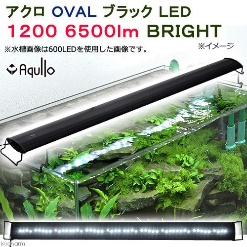 アクロ OVALブラック LED 1200 6500lm BRIGHT Aqullo 120cm水槽用 沖縄別途送料 関東当日便