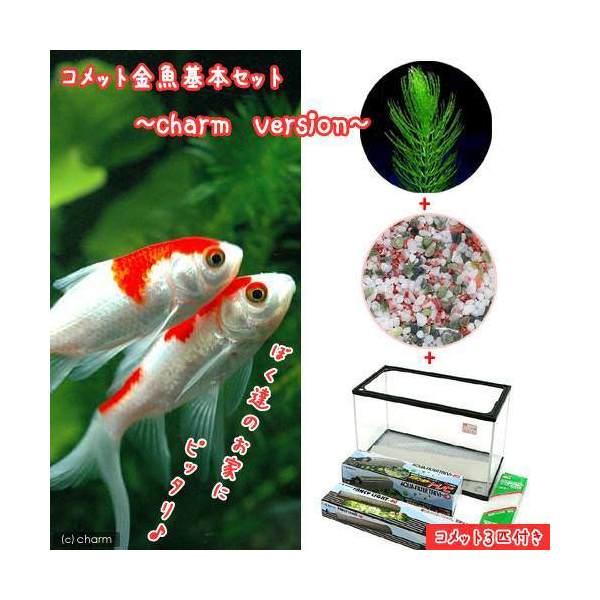 (goldfish) Comet goldfish breeding set charm version 60cm water tank  explanation memo Honshu Shikoku-limited