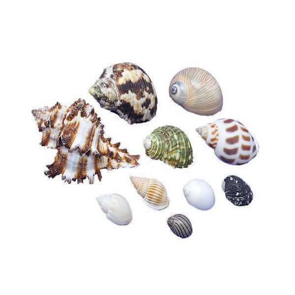 貝殻 やどかりの貝殻 保障 ミックスサイズ おまかせ 形状おまかせ 殻口3~40mmミックス 関東当日便 10個 国内在庫
