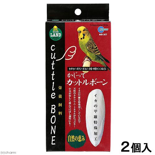 消費期限 2023 05 31 店 かじってカットルボーン マルカン 関東当日便 開催中