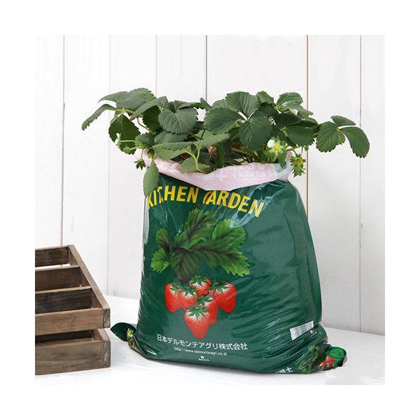 人気の製品 観葉植物 デルモンテ キッチンガーデン 簡単イチゴ栽培セット イチゴ苗 期間限定 いちご付き 家庭菜園 1セット めちゃデカッ
