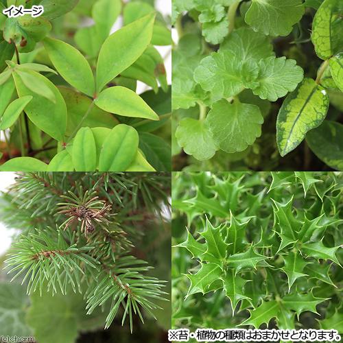 コケ 植物 種類