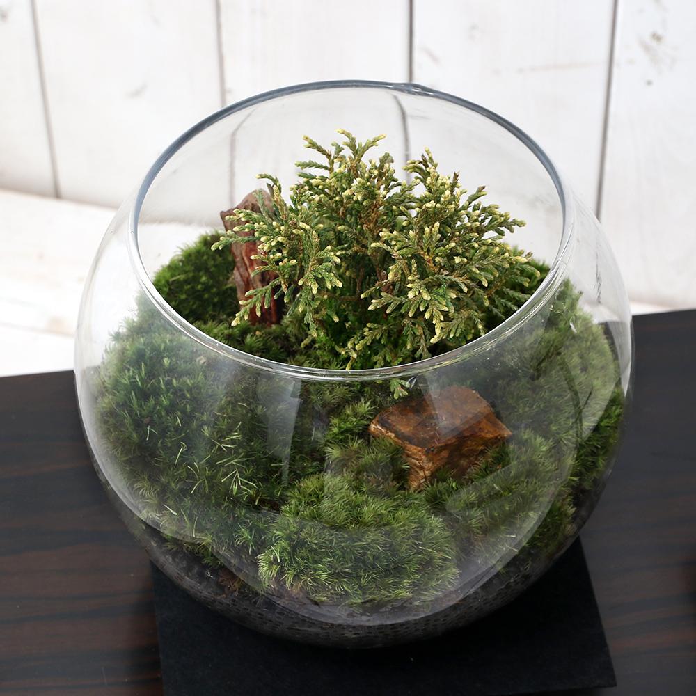 (観葉植物)苔Terrarium 和景レイアウトセット ~白芽椹(シロメサワラ)~ 説明書付
