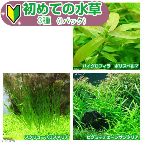 水草 初めての水草 期間限定の激安セール 発売モデル 3種 説明書付 1パック