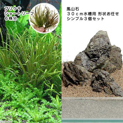 (水草)ブリクサ ショートリーフ(4株分)+風山石 シンプル3個セット 本州・四国限定