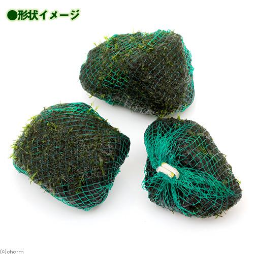 (水草)巻きたて ウォーターフェザー 溶岩石ボール(約5cm)(無農薬)(1個) 北海道航空便要保温