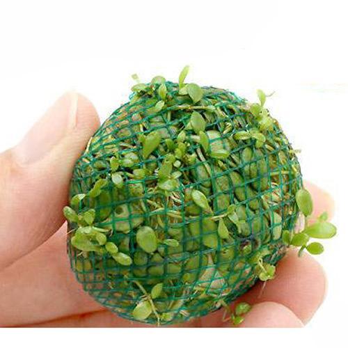 水草 ※ラッピング ※ 巻きたて 税込 グロッソスティグマボール 1個 無農薬 水上葉