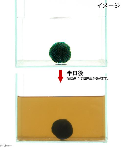 (水草)巻きたて セイヨウマリモ ヤシャブシ玉(無農薬)(1個) 北海道航空便要保温