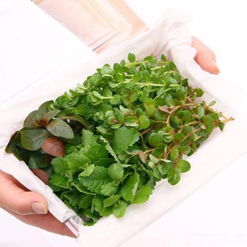 水草 国産品 プレゼント 初心者向けおまかせ水草詰め合わせパック 4種 水上葉 1パック 無農薬