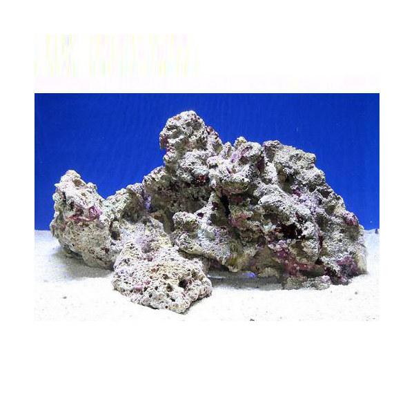 (海水魚)Bグレードライブロック M-Lサイズミックス(5kg)(形状お任せ) 沖縄別途送料 北海道・九州航空便要保温