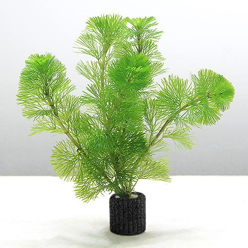 (水草)メダカ・金魚藻 マルチリングブラック(黒) カボンバ(5個) 北海道航空便要保温
