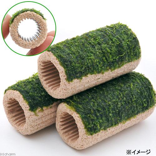(水草)巻きたて ラージマルチリング ウィローモス(無農薬)(3個) 北海道航空便要保温